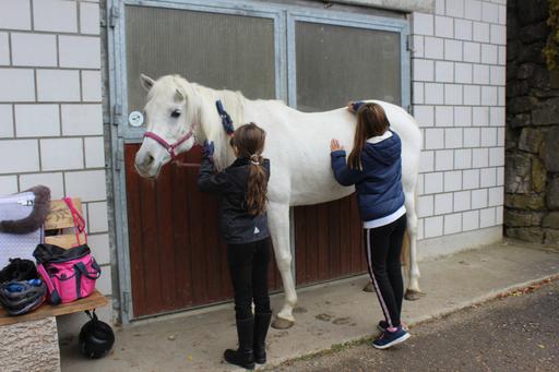 Begegnung mit Pferden