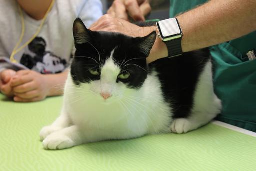 """""""Wie erkenne ich das Alter einer Katze, wenn ich es nicht weiss?"""" Anfassen und Lernen in der Kleintierpraxis Tiergarten"""
