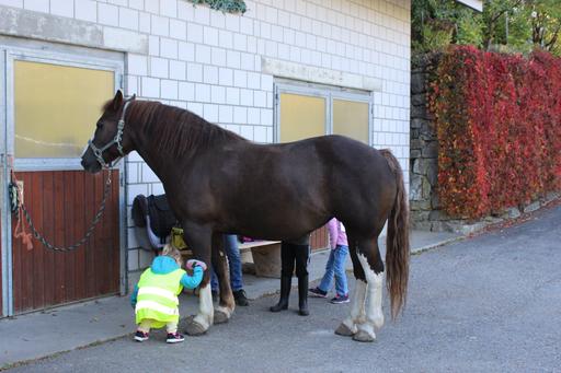 Striegeln bei der Begegnung mit dem Pferd in Romont